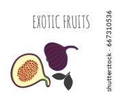 fig fruit vintage design... | Shutterstock .eps vector #667310536