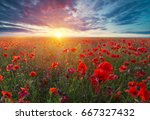 beautiful field of red poppies... | Shutterstock . vector #667327432
