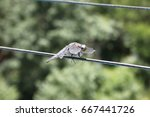 Blue Dragonfly Sitting On Wires