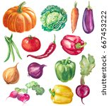 set of vegetables isolated on... | Shutterstock . vector #667453222