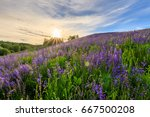 sunset on a hill covered with... | Shutterstock . vector #667500208