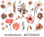 tropical collection with plants ... | Shutterstock . vector #667526632