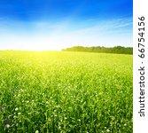 Field In Summer And Sun In Blu...