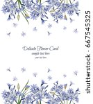 Delicate Agapanthus Card.