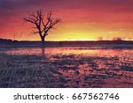 Landscape Of Red Hot Red Sky...