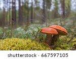 mushroom | Shutterstock . vector #667597105