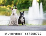two english bull terrier dogs... | Shutterstock . vector #667608712