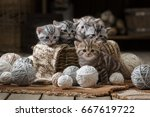 Stock photo group of small striped kittens in an old basket with balls of yarn 667619722