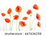 Red Poppy Flowers In A Row On...