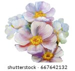 bouquet of pink flowers with... | Shutterstock . vector #667642132