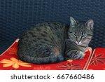 Small photo of a domestic cat observe us