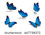 fifth blue butterfly  isolated... | Shutterstock . vector #667738372