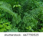 wild plants. flowers and trees... | Shutterstock . vector #667750525