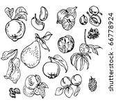 fruits | Shutterstock .eps vector #66778924