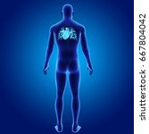 human heart posterior view 3d...   Shutterstock . vector #667804042