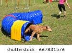 dog agility contest  | Shutterstock . vector #667831576