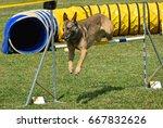 dog agility contest  | Shutterstock . vector #667832626