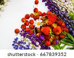 wild strawberry with flowers | Shutterstock . vector #667839352