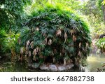 green tropical trees in the...   Shutterstock . vector #667882738