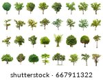 isolated tree on white... | Shutterstock . vector #667911322