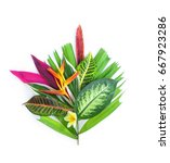 tropical plants on white... | Shutterstock . vector #667923286