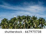 Image Of Green Coconut Trees...
