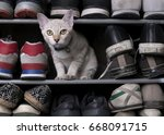 Cute Cat Playing In Shoes