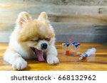 close up of pomeranian dog... | Shutterstock . vector #668132962