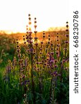 Small photo of Blossoming agrimony on a sunset in summer.