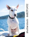 Small photo of White terrier canine dog sitting on padded back stern of wake boarding and water skiing motor boat with shallow depth of field deep blue lake and shore in background of summer afternoon boating scene