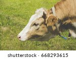 a beautiful brown and white cow ... | Shutterstock . vector #668293615