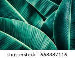 tropical foliage texture  large ... | Shutterstock . vector #668387116