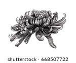 chrysanthemum flower drawing... | Shutterstock . vector #668507722