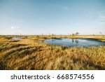 Bog  Morass  Swamp  Marsh...