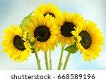 Five Sunflowers On A Blue...