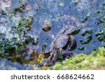 crabs on a rockcrabs have a... | Shutterstock . vector #668624662