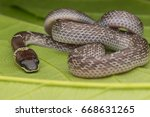 Close Up Of Small Snake On...