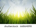 green grass and blue sky with...   Shutterstock . vector #66864898