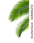 tropical palm leaf isolated on... | Shutterstock . vector #668686252