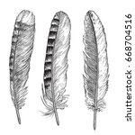 feather illustration  drawing ... | Shutterstock .eps vector #668704516