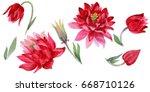 wildflower aquilegia flower in... | Shutterstock . vector #668710126