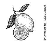 hand drawn vector illustration... | Shutterstock .eps vector #668728006