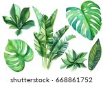 jungle botanical watercolor... | Shutterstock . vector #668861752
