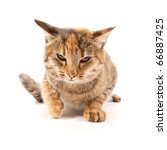 Stock photo angry cat isolated on a white background 66887425