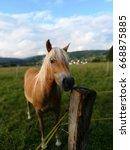 horses portait   Shutterstock . vector #668875885