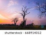 Dead Tree On Meadow Sunset...