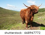 scottish highland cow | Shutterstock . vector #668967772