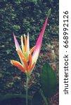 Small photo of Bird of paradise with sunlight,beautiful flower,vintage tone nature background,Strelitzia reginae Ait.wallpaper