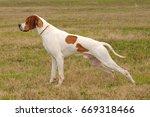 portrait of german shorthaired... | Shutterstock . vector #669318466