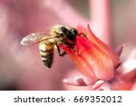 Bee On Pink Flower At Unam...
